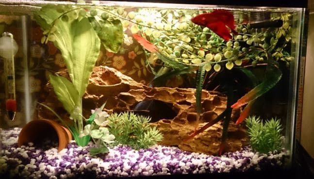 Benefits of LED aquarium lighting