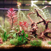 Best LED Aquarium Lighting for Plants, Corals – (2018) Reviews