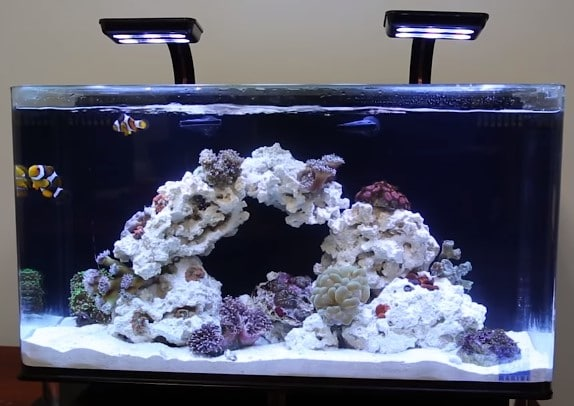 Best fish tanks top 10 picks in 2018 with reviews guide for Good fish for small tanks