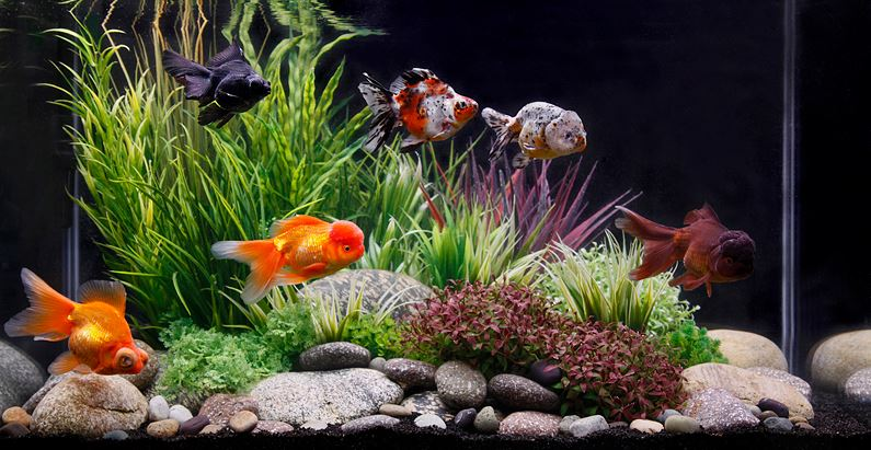 Best Fish Tank Filters 2019 Reviews Top Picks Guide