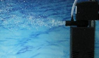 How to Install a Fish Tank Filter