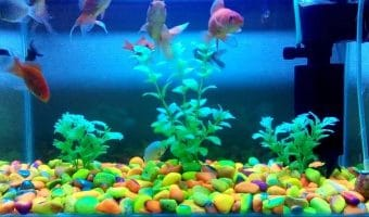 How to Quiet a Fish Tank Filter?