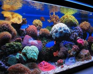 Best led lights for reef tanks