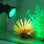 What is the Best Aquarium LED Lighting?