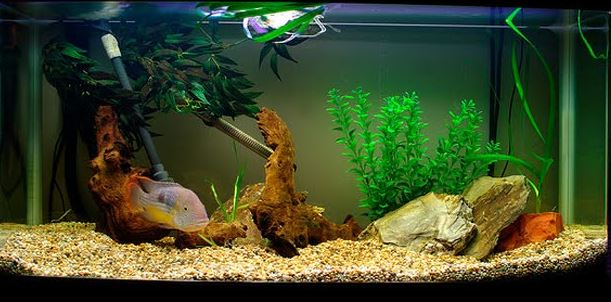 gravel-and-decorations-in-fish-tank