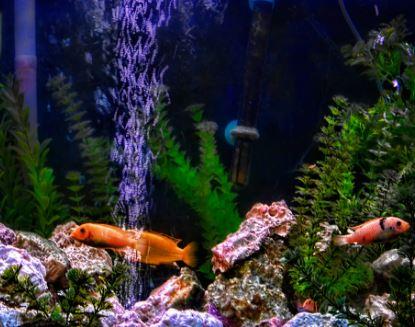 Canister Filter For Aquarium