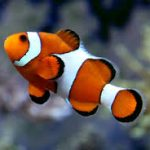 10 Best Nano Saltwater Fish For Your Nano Reef Tank