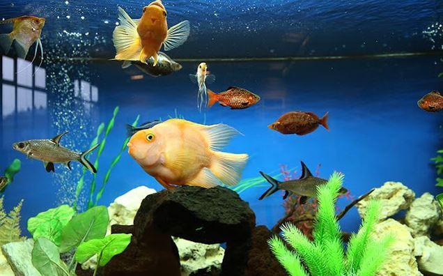 10 Questions To Ask When Buying Aquarium Fish Aquarium Adviser