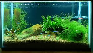 What Do I Need To Do To Acclimate The Fish To My Tank