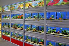 Are You a Registered Pet Store or Aquatic Shop?