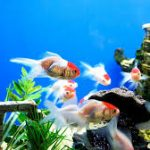 10 Questions to Ask When Buying Aquarium Fish