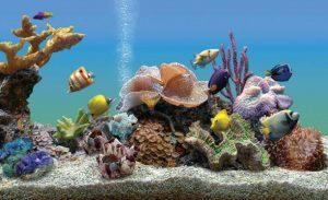 10 Best LED Aquarium Lighting for Plants, Corals – (2019 Reviews)