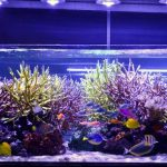How to Choose LED Lights for Aquarium