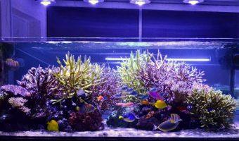How to Choose LED Lights for Aquarium