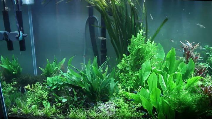 Best reverse osmosis water system for aquarium