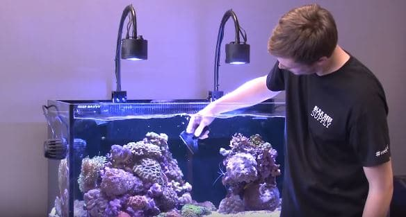 The Tools You Need To Maintain An Aquarium