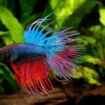 How often Should You Feed a Betta Fish?