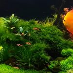 How to Replace Water in your Fish Tank?