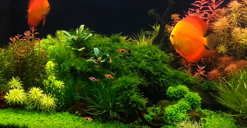 How to replace water in your fish tank aquarium adviser for How to raise ph in fish tank