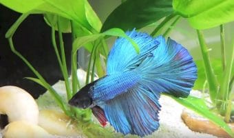 How to Take Care of Your Betta Fish