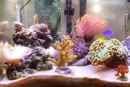 Best reef salt, Salt for reef tank