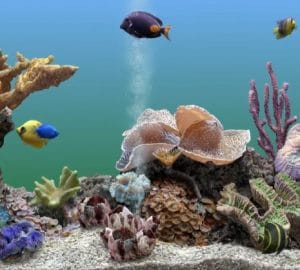 Best aquarium power filter reviews