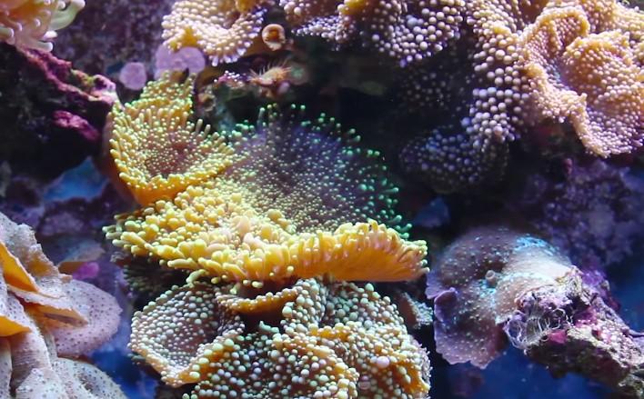 Best coral food