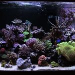 Best Light Spectrum for Coral Growth