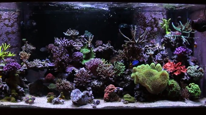 Best Light Spectrum For Coral Growth Aquarium Adviser