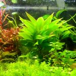 The 10 Best Plants for Freshwater Aquarium