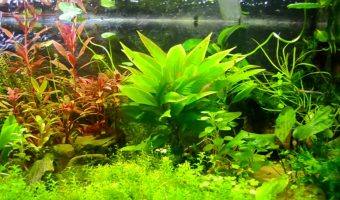 The 10 Best Plants for Freshwater Aquarium