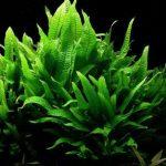 15 Best Low Light Plants for your Aquarium – Easy to Grow Plants