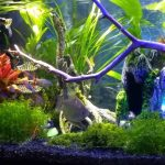 15 Best Freshwater Fish for Aquarium