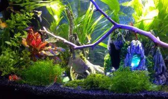Best Freshwater Fish for Aquarium