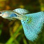 15 Best Freshwater Fish for Aquarium