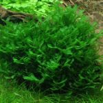15 Best Low Light Aquarium Plants