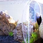 How to Quiet an Aquarium Air Pump