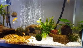 How to Get Rid of Brown Algae in Fish Tank