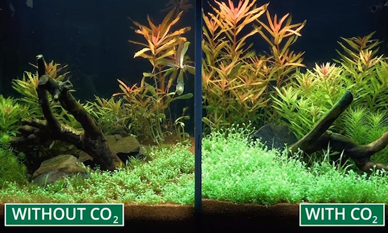 Benefits of using co2 regulator in fish tank