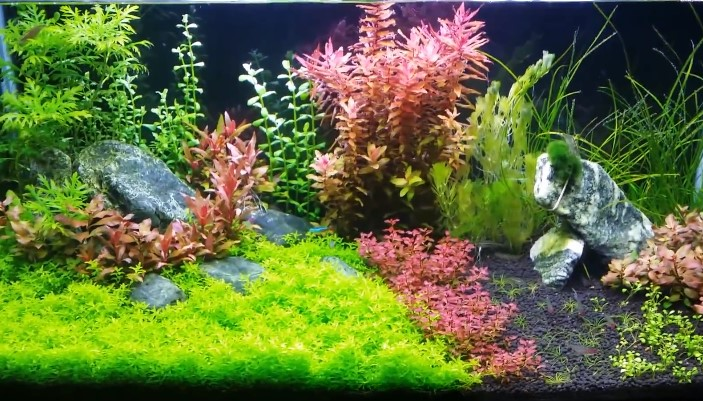 The Best Aquarium CO2 Regulator For Planted Tank Care