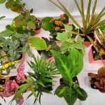 15 Best Plants for Terrarium