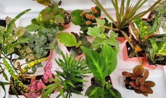 Best Plants for Terrarium