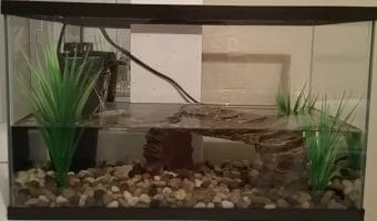 How to Clean Turtle Tank Glass