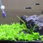 8 Best Aquarium Carpet Plants for Beginners