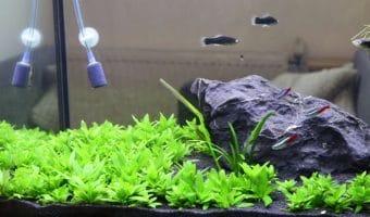 Best Aquarium Carpet Plants for Beginners
