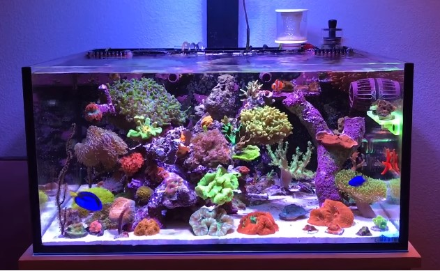 8 Best Nano Reef Tank Available Today