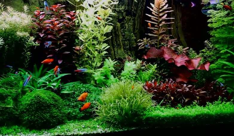 Best Aquarium Plant Fertilizer Review