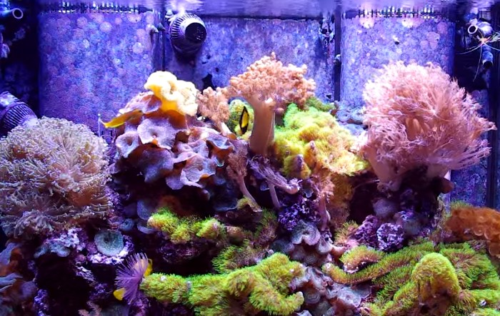 The Best Aquarium Wave Maker for Saltwater Marine, Reef or Fish Tanks