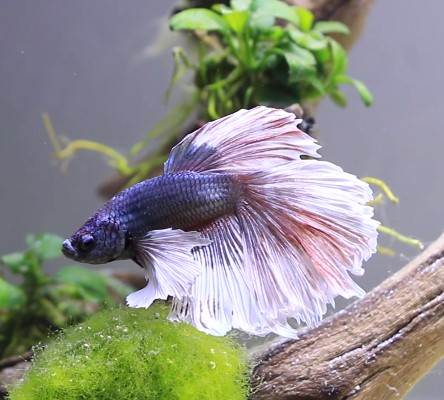 The Best Betta Filters - Make Your Betta Fish Happy & Healthy