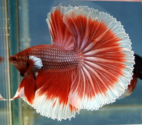 6 Best Betta Fish Food Available Today 2019 Reviews Amp Guide
